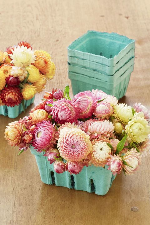 "Berry Baskets:  Don't toss those cardboard berry baskets. ""They're the ideal size to highlight tighter arrangements featuring a single flower type,"" Kiana says. ""Strawflowers are lovely, and you don't even need to water them. They look the same whether they're dead or alive."""