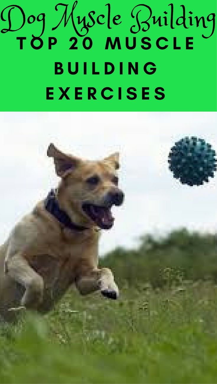 Dog Muscle Building The Best Top 20 Dog Muscle Building Exercises