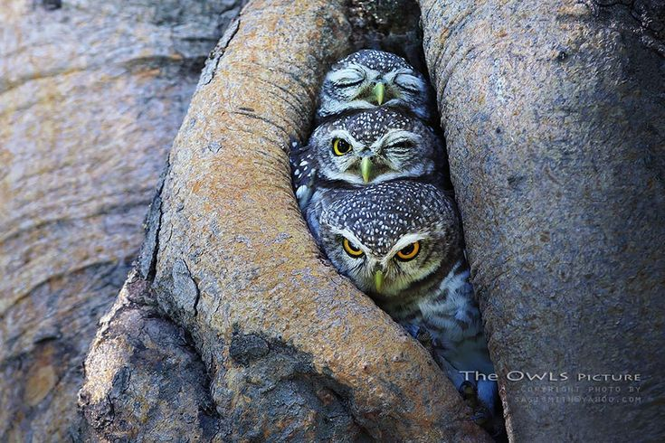 Breathtaking Owls Photography Captured By Thai Photographer Sasi Smith