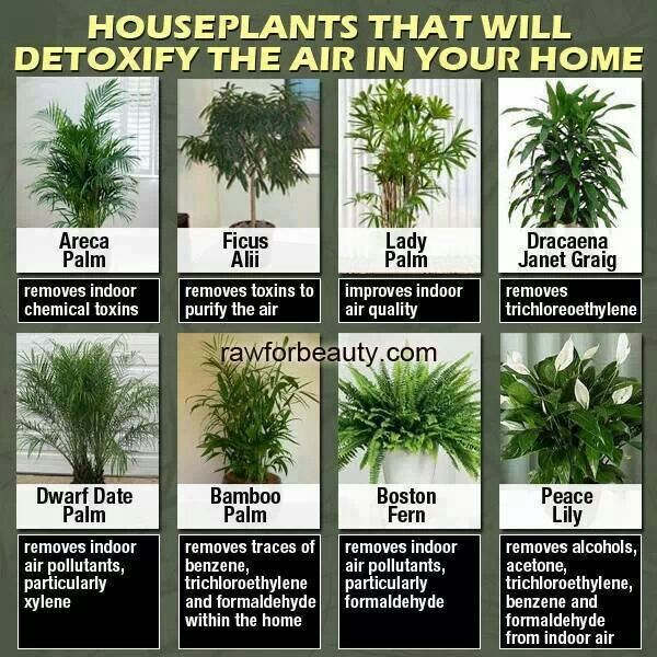 Houseplants that detoxify the air in your home