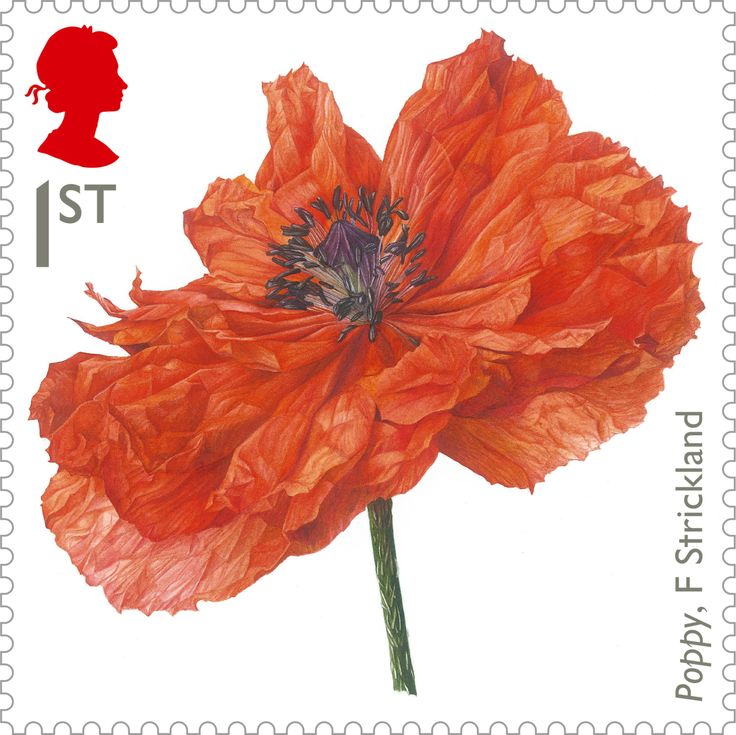 Painting of a poppy by botanical artist Fiona Strickland, 1st class. More here: http://bit.ly/X2yQvb