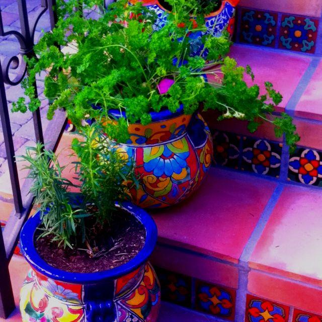 Festively Mexian tile herb pots                                                                                                                                                     More
