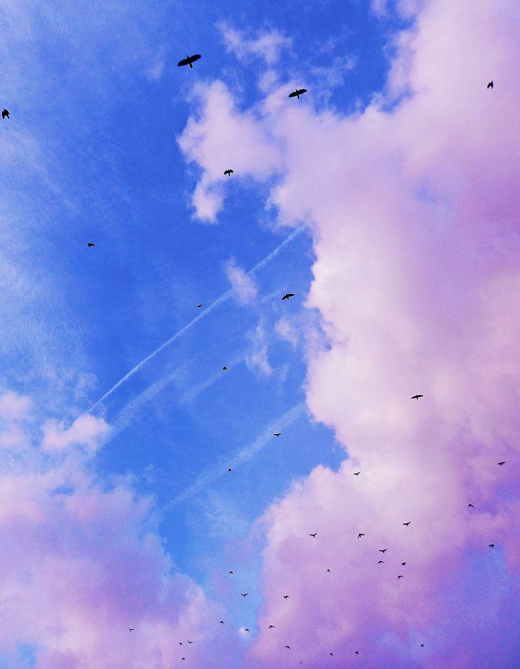 #sky #birds #fly #travel #journey #wanderlust #blue #beautiful