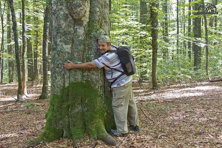 Pădurile virgine de fag din România, însumând aproape 24.000 ha, au fost încluse pe lista Patrimoniului Mondial UNESCO