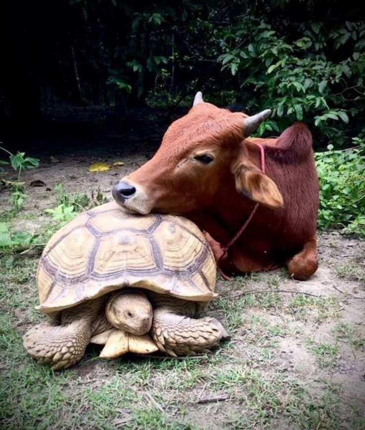 25 Odd Animal Couples You'll Find Adorable Having a hopping good time. Just two pals just hamming it up for the camera. This primate is fully devoted to his pooch pal. Stop monkeying around, and take the picture! She's got the best seat in the house. A hippo and a tortoise… name a stranger friendship. …