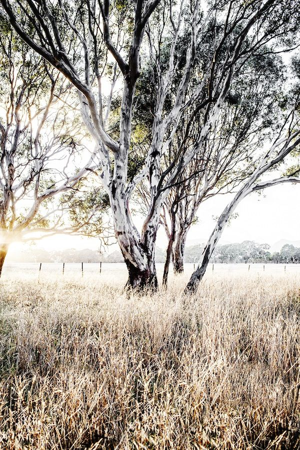 Trees in the grass. Photography and styling - Kara Rosenlund. via @The Design Files