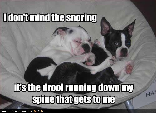 Funny Quotes About Snoring: 17 Best Ideas About Snoring Humor On Pinterest