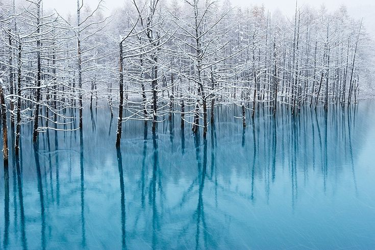 The blue pond is a common name of this artificial pond which is in Hokkaido. This pond's photograph was selected as part of OS X Mountain Lion's wallpaper package by Apple Inc.