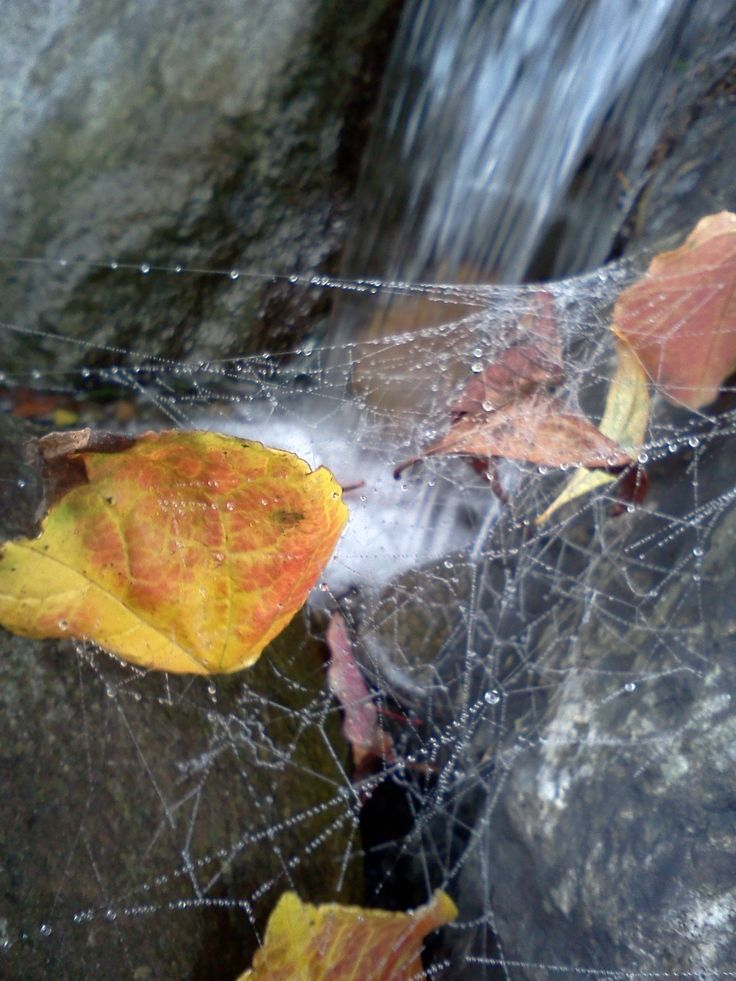 Fog brings out the drama of the cobweb over our pondless waterfeature.  Waterscene Designs, Ladner BC