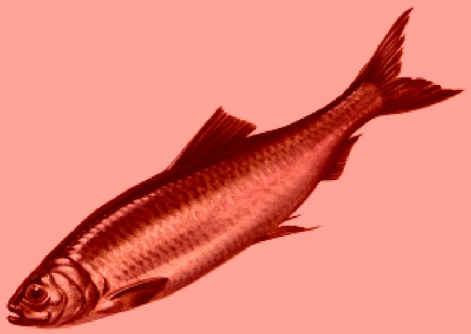 Red Herring - Television Tropes & Idioms