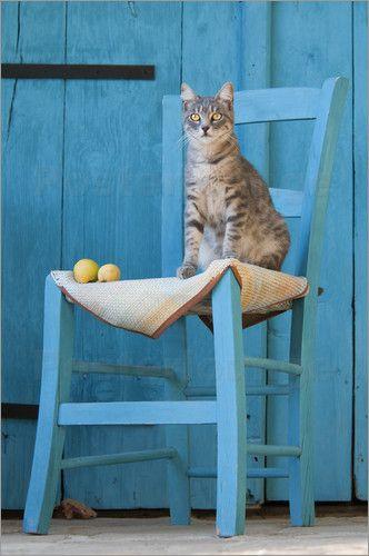 Katho Menden - Katze, blau tabby, auf blauem Stuhl vor blauer Holztür
