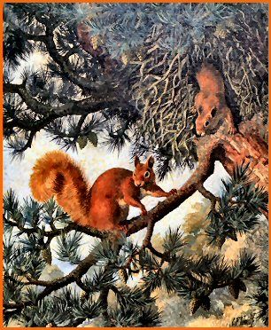 Red Squirrels by C.F. Tunnicliffe