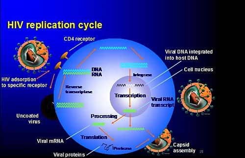 Photo of HIV Virus Replication Cycle: 7 stages of HIV Life Cycle with Picture Diagram