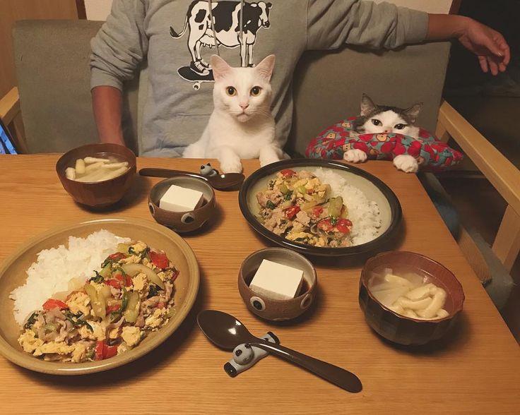 お久しぶりにセロリ丼♩ 美味しい〜♡ #セロリ丼レシピ #八おこめ #ねこ部 #cat #ねこ #八おこめ食べ物
