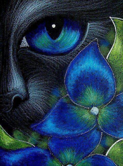 Gato e a flor azul                                                                                                                                                                                 Más