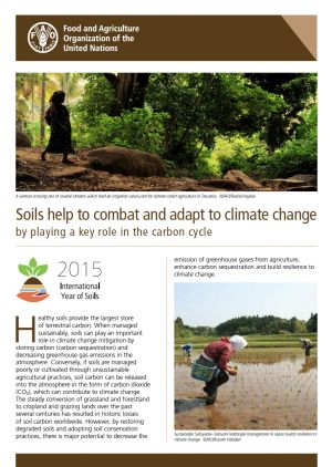 Soils are part of the solution when it comes to climate change mitigation. Healthy soils play an important role in climate change mitigation by storing carbon (carbon sequestration) and decreasing global greenhouse gas emissions in the atmosphere.