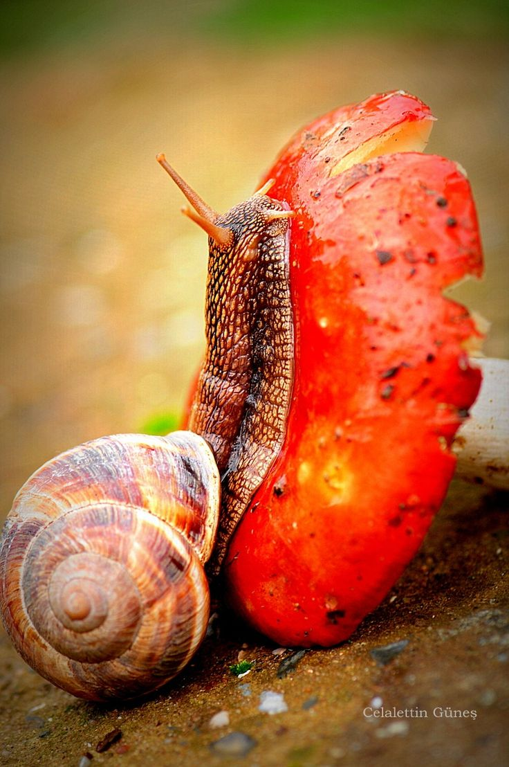 408 best snail obsession images on pinterest snail nature