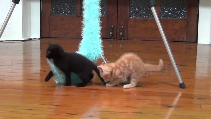 best cat toys for baby kittens -  furry scarf - funny kitten videos