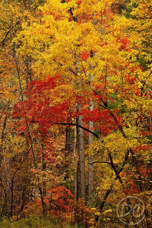 384 Best North Carolina Images On Pinterest Waterfall Waterfalls And Western North Carolina