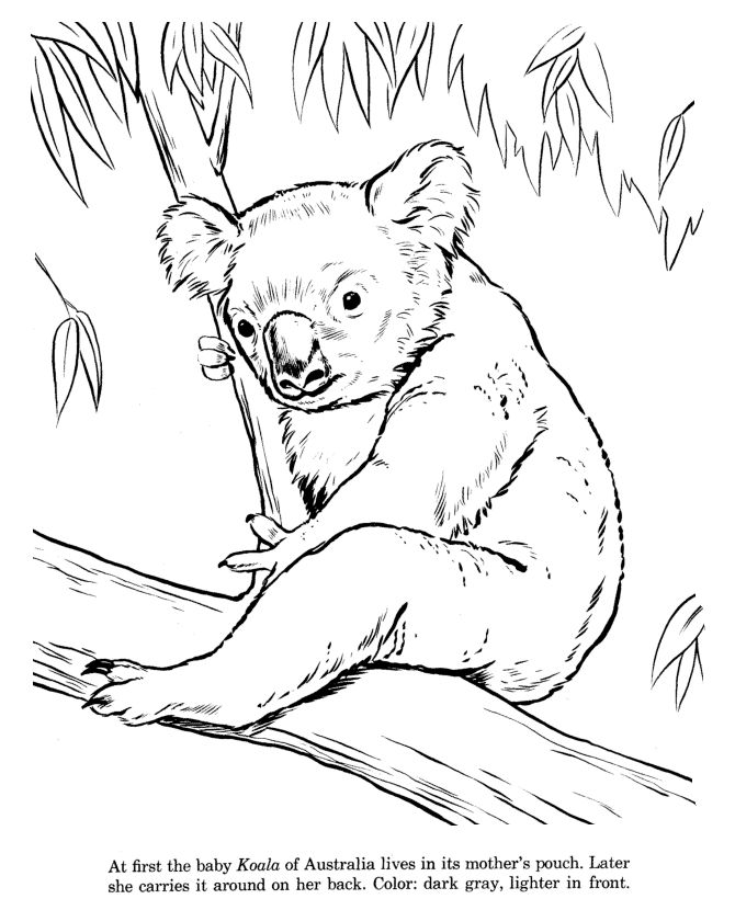 21 best Coloriage images on Pinterest Coloring books, Print - best of free coloring pages of endangered animals