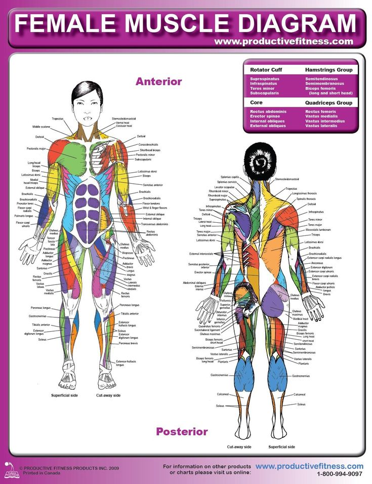 120 Best Anatomy Images On Pinterest | Health, Human Anatomy And