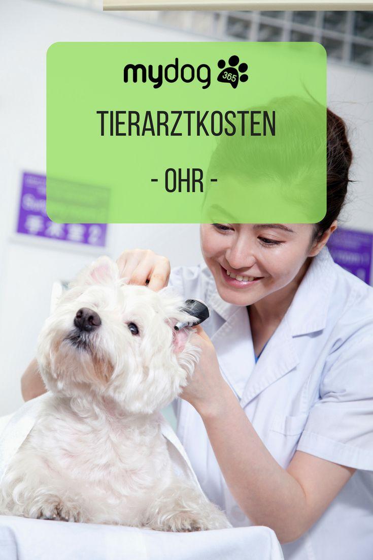 Hund Tierarzt Gesund Ohr Tierarzt Was Kostet Ein Hund Tiere