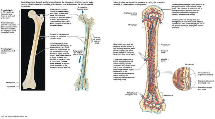 344 Best Images About Everything Orthopaedic On Pinterest