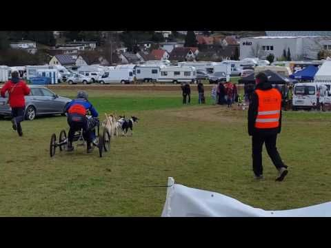 Schlittenhunderennen in Malmsheim - YouTube