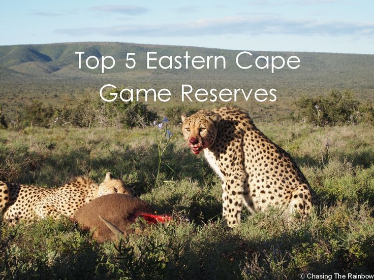 Top 5 Eastern Cape Game Reserves