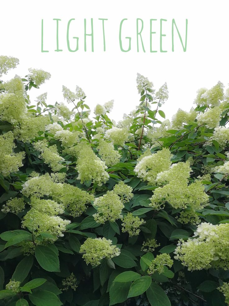 Color of The Week: light green by @detaljee