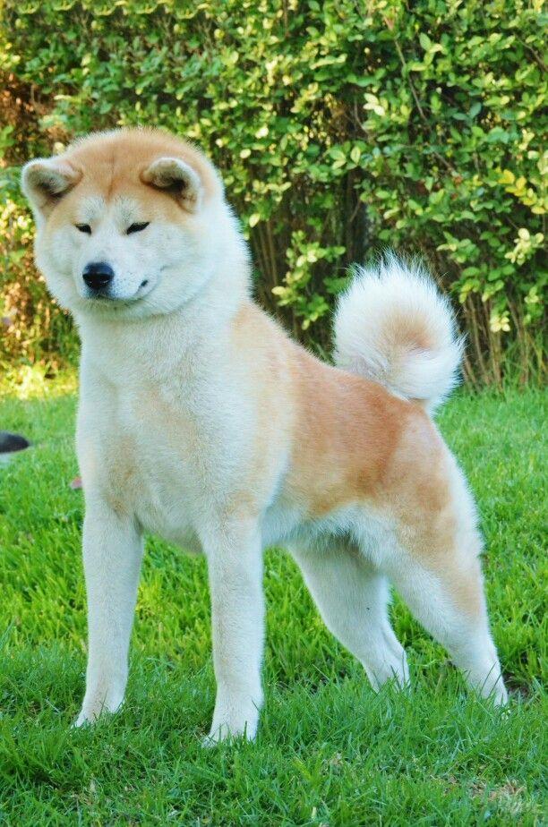 Suki 15 meses