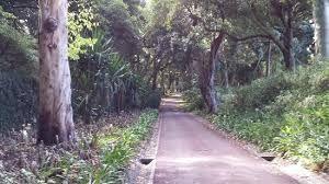 povoacao sao miguel acores - Google Search