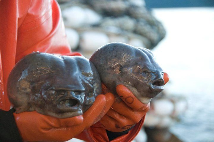 Devils Spawn Blobfish. That's why the ocean is not for me ...