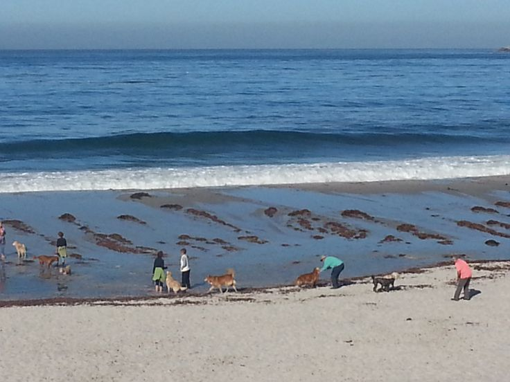 It was high tide when I walked past Carmel Beach. The dogs were having a great time! http://www.ilovecarmelcalifornia.com