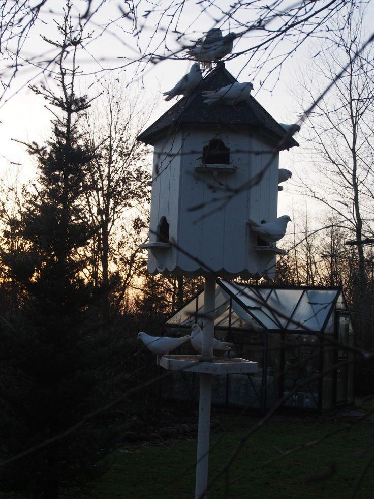 Haven:Lidt skumringsbilleder, duer og sol….