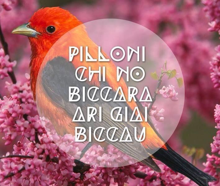 """Pilloni chi no biccada ,at giai biccau... """"Uccello che non becca,ha già beccato""""..@"""