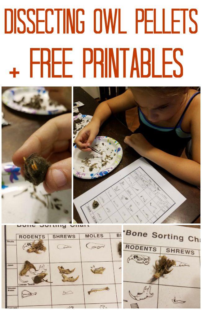 219 besten Homeschool Science | Biology Projects Bilder auf ...