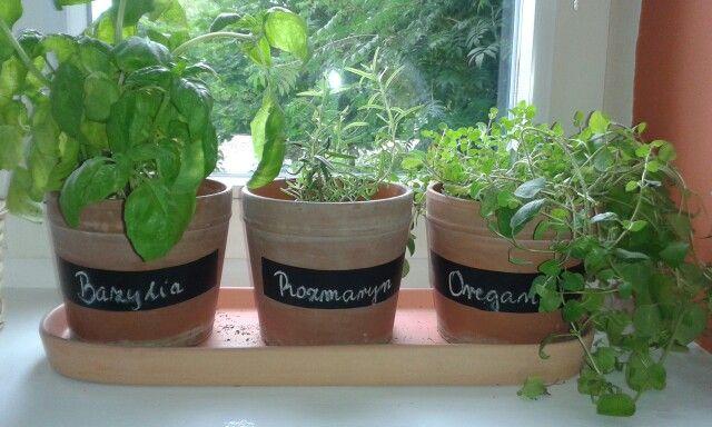 Moje zioła