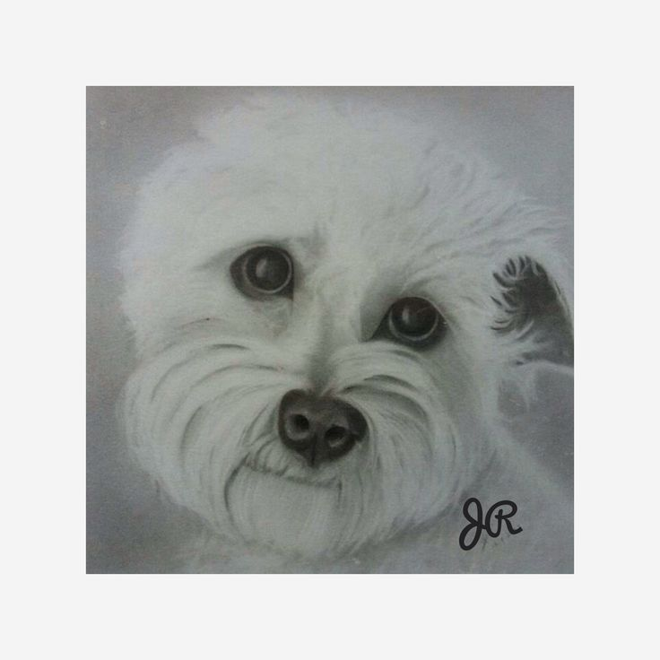 This is a drawing I did of a friends dog max.
