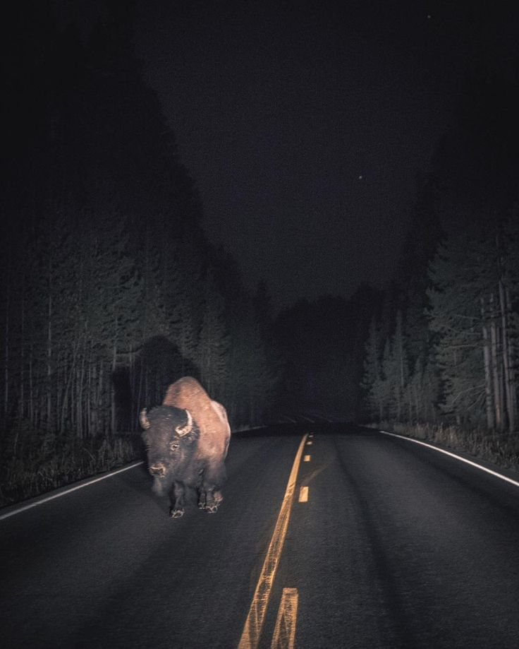 ✸This Old Stomping Ground✸, wildnesses: Roam the Night