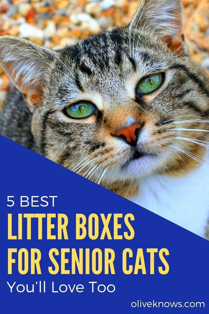 5 Best Litter Boxes For Senior Cats 2019 Guide Best Litter Box Litter Box Cats