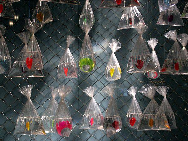 Visual: The Ginza.gran originalidad con las bolsas de agua.AF