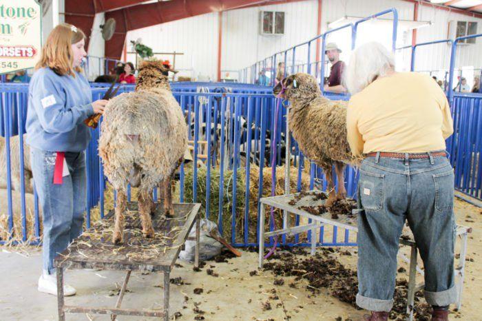 5. Sheep and Wool Festival (May 6th - May 7th)