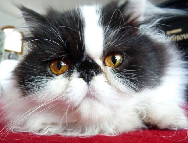 Health : Recognizing cat eye problems and diseases - Cat's eyes are magnificent, but also really sensitive to infections and diseases. As a cat owner, you must be able to recognize the signs of an eye disease.