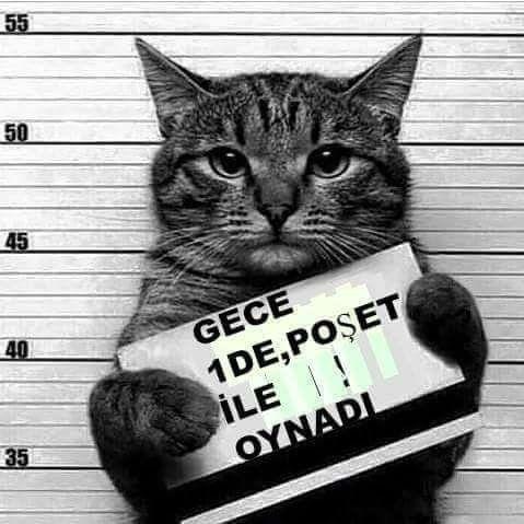 """<a href=""""http://musapg.catspray.hop.clickbank.net/""""><img src=""""http://www.catsprayingnomore.com/images/banners/standard/ad3.jpg"""" border=""""0"""" alt=""""Cat Spraying No More"""" /></a>"""