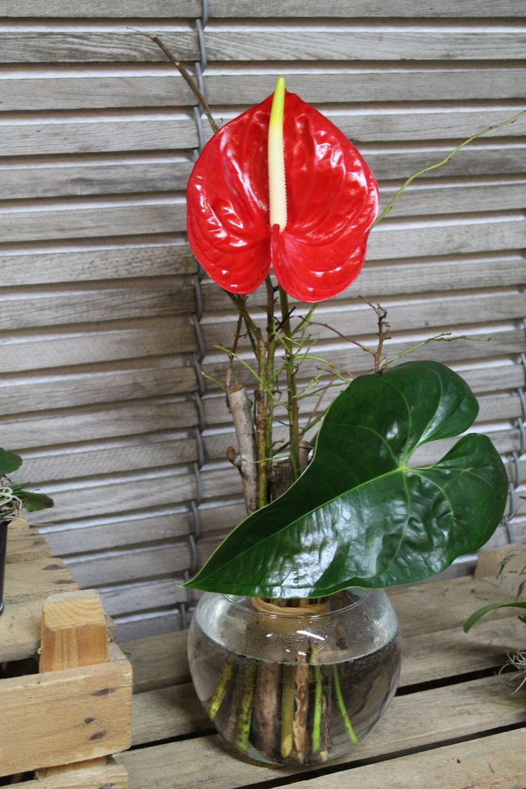 anthurium andreanum in einem fr hlingshaften stehstrauss integriert blumenstrauss selber. Black Bedroom Furniture Sets. Home Design Ideas