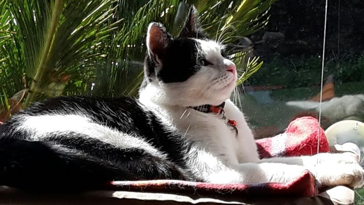 Kitty - Our Monty sunning in the afternoon xxxx
