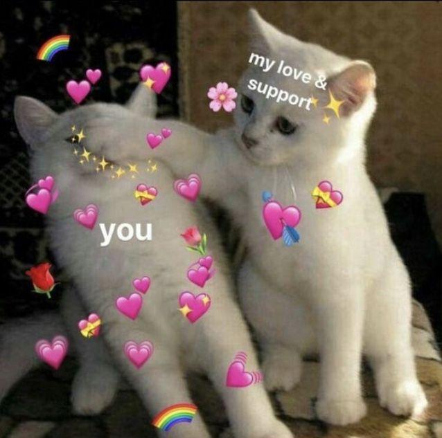 𝚙𝚒𝚗𝚝𝚎𝚛𝚎𝚜𝚝 𝚔𝚊𝚕𝚎𝚢𝚑𝚘𝚐𝚐𝚕𝚎 Love Memes Cute Memes