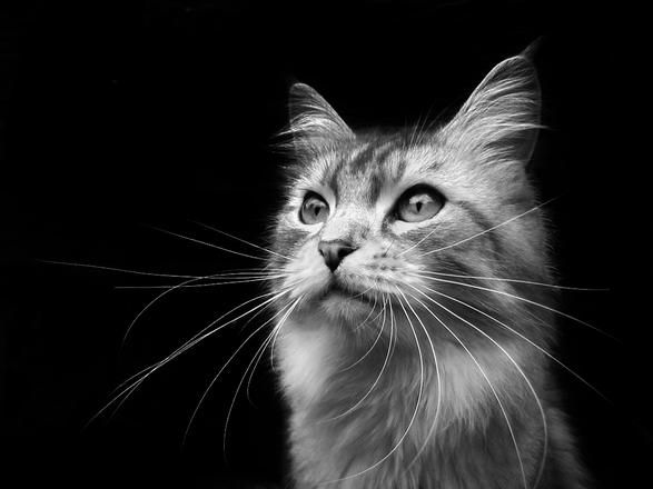 Cats Animals Photo Contest Photocrowd Photo Competitions Community Site Animal Photo Animals Pets Cats