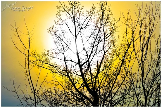 the sun and trees